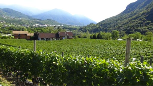 I Vini dell Angelo dal paradiso del Trentino 6