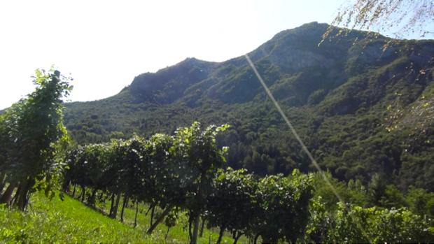I Vini dell Angelo dal paradiso del Trentino 7