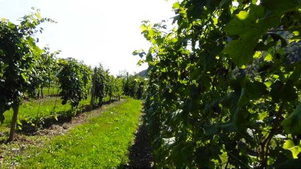 I Vini dell Angelo dal paradiso del Trentino 8
