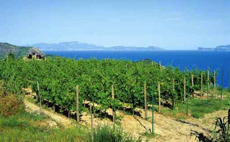 I vini delle isole minori 17