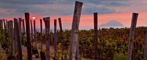 I vini delle isole minori 18