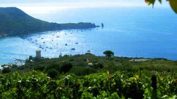 I vini delle isole minori 19