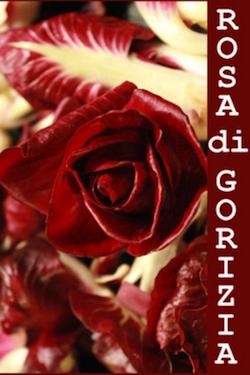radicchio rosa de.co. di gorizia 2
