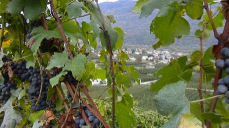 2 spec valtellina - 1 - enoturismo dolce . vino e marmellata 1