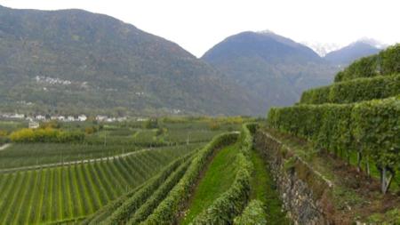2 spec valtellina - 1 - enoturismo dolce . vino e marmellata 2