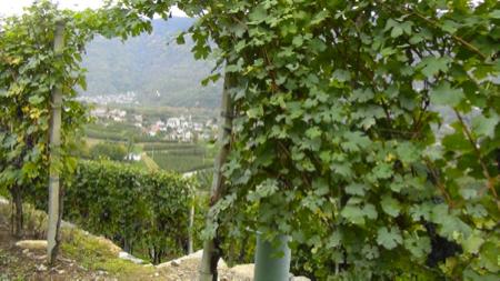 2 spec valtellina - 1 - enoturismo dolce . vino e marmellata 3