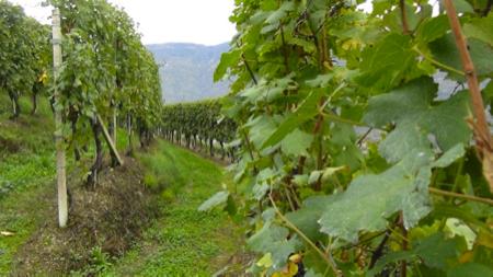 2 spec valtellina - 1 - enoturismo dolce . vino e marmellata 6