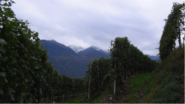 2 spec valtellina - 2 - vino famiglia triacca 3