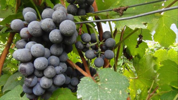 2 spec valtellina - 2 - vino famiglia triacca 4