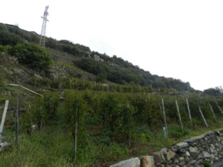 2 spec valtellina - 4 - vino dei vigneti adottati 6