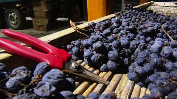 spec prov Verona -8- Contra Malini - vino in Valpolicella 1