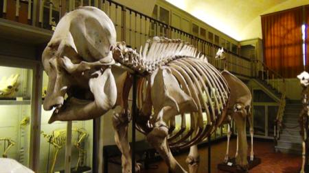 Spec Firenze-3-museo La Specola 10