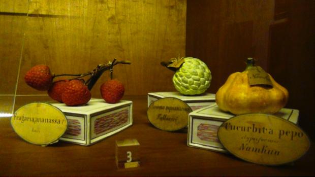 Spec Firenze-3-museo La Specola 5