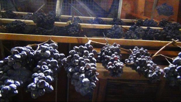 spec veronese -6- vino valpolicella contra malini 5