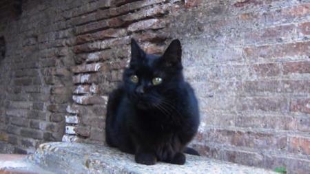 3spec Roma-5-gatta piu famosa di Roma 1