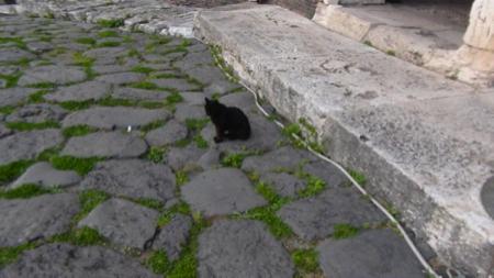 3spec Roma-5-gatta piu famosa di Roma 3
