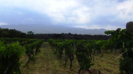 turismo del vino sull etna 1