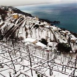 Fiorduva vino campano - vinitaly1