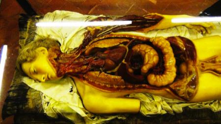 cere anatomiche - Museo La Specola Firenze 4