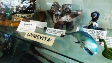 6spec Genova-4-Museo etnomedicina 4