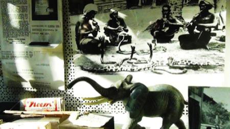6spec Genova-4-Museo etnomedicina 9