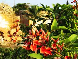 2spec Favignana e Levanzo-2-giardini ipogei 10