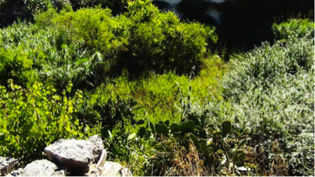 2spec Favignana e Levanzo-2-giardini ipogei 4