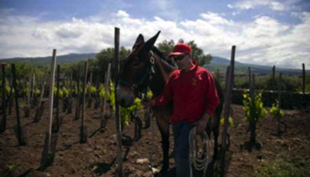 vino-Toscano-vs-paesaggio_05