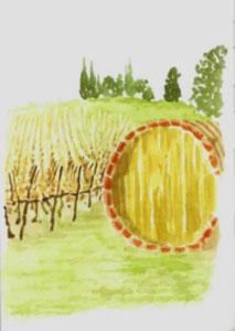 vino-Toscano-vs-paesaggio_06