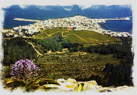 apicoltura nelle isole siciliane 1