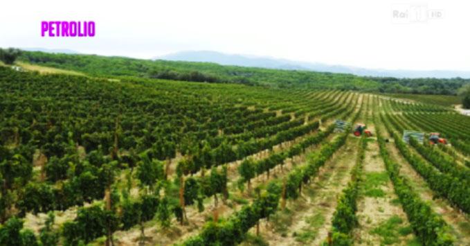 petrolio-vino-italiano_02