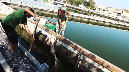 spec Comacchio-4-pesca 6