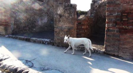 spec Pompei-8-cani abbandonati da turisti 1