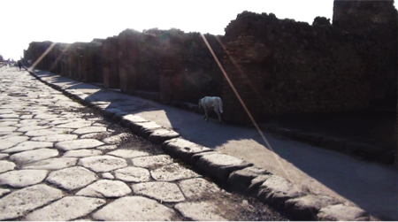 spec Pompei-8-cani abbandonati da turisti 2