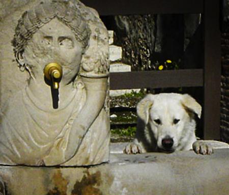 spec Pompei-8-cani abbandonati da turisti 3