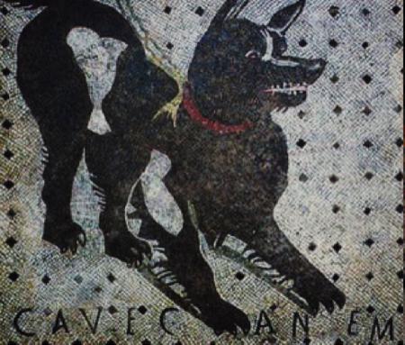 spec Pompei-8-cani abbandonati da turisti 4