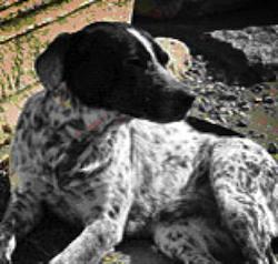 spec Pompei-8-cani abbandonati da turisti 6