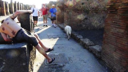 spec Pompei-8-cani abbandonati da turisti 7