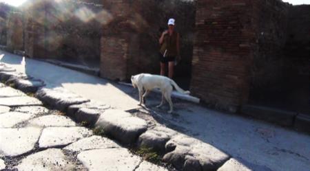 spec Pompei-8-cani abbandonati da turisti 8
