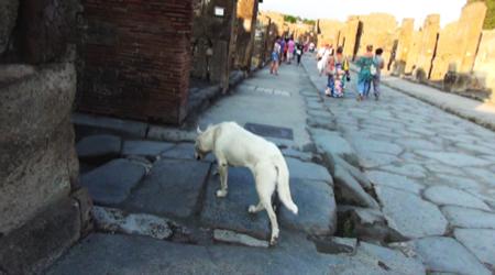 spec Pompei-8-cani abbandonati da turisti 9