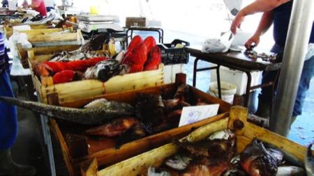 2spec Trapani-4-mercato pesce 2