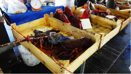 2spec Trapani-4-mercato pesce 5