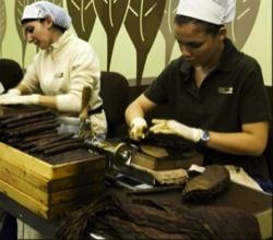 lavorazione manuale sigaro toscano 1