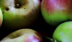 presidi slow food 8 - mela rosa monti sibillini 2