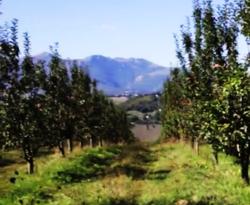 presidi slow food 8 - mela rosa monti sibillini 3