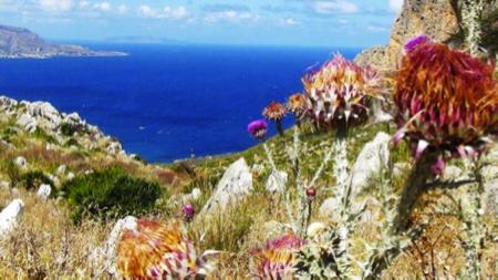 spec Custonaci-5-riserva naturale monte cofano 1