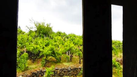 vinimilo 6 - etna wine party 5