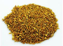 bidi grano mediterraneo 1