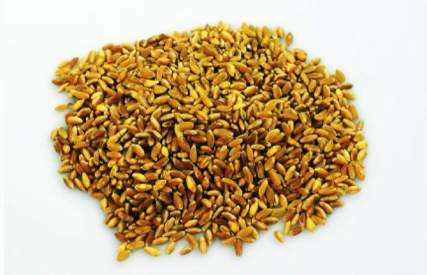 russello - grano sicilia orientale 1