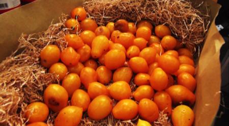 pomodorino giallo da serbo 2